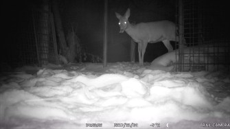 Trailcam_Rumpelhalde_Winter07_17