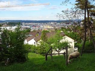 Rumpehalde_Spaetfruehling17_4