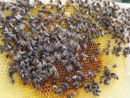 Frühlingskontrolle der Bienen