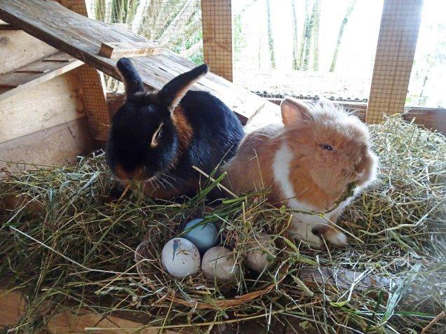 Der Osterhase war bei unseren Kaninchen