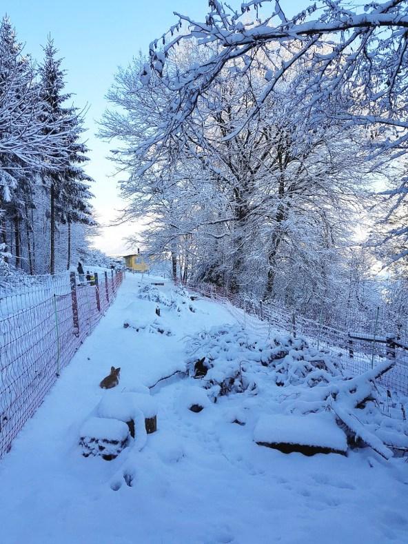 Herbst17_Winter18_Rumpelhalde (1 von 116)