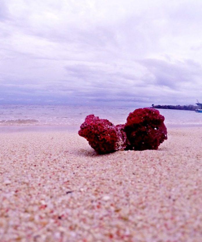 Pink beach of Lombok - Runaway42