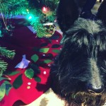 Five Things I Love About December