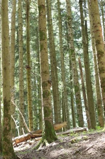 trail_foreste_casentinesi_100