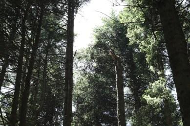 trail_foreste_casentinesi_101