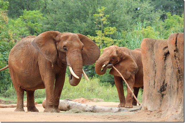 Zoo 143