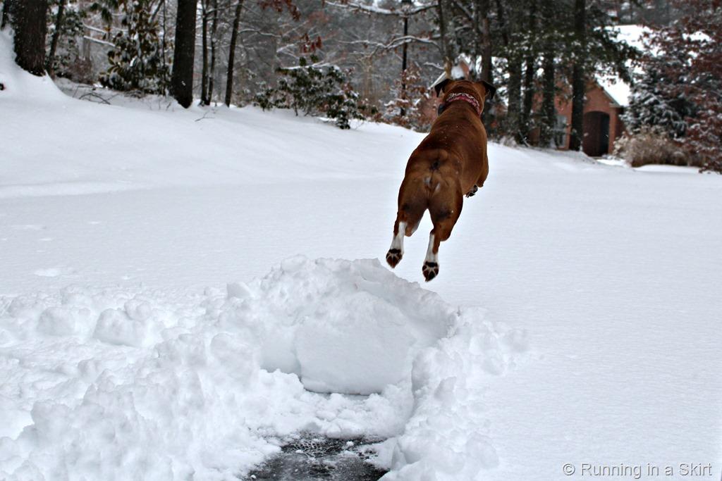 snowreina14a.jpg
