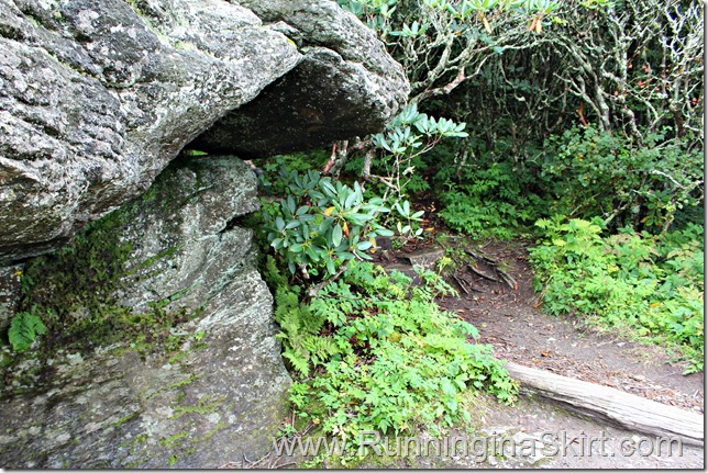 craggy_pinacle_trail_4