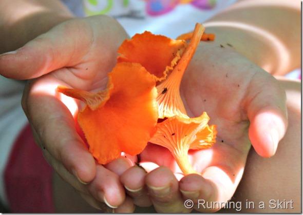 chantrelles_mushroom_hunting