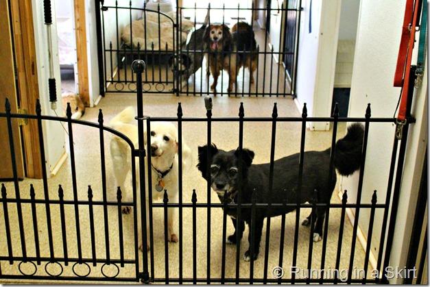 forever_farm_dog_room