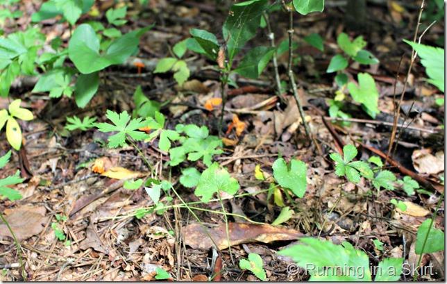 mushroom_hunting_ground