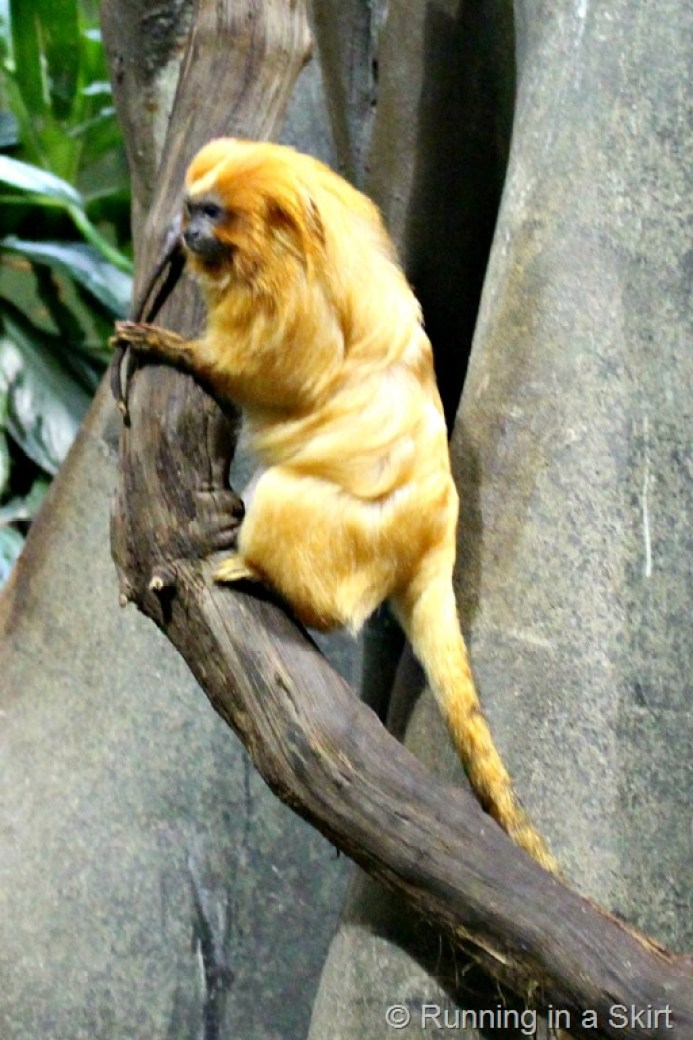 national_zoo_small_mammals.jpg