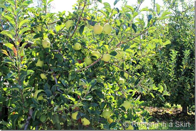 apple-farm-2