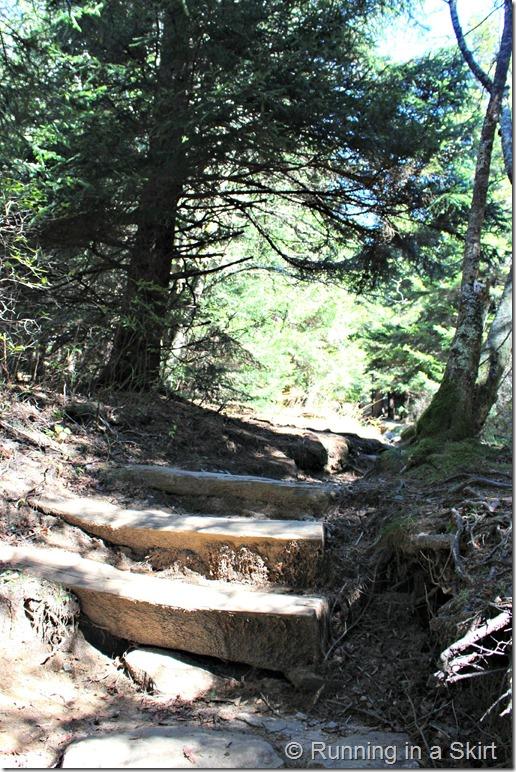 black-balsam-hike-trail