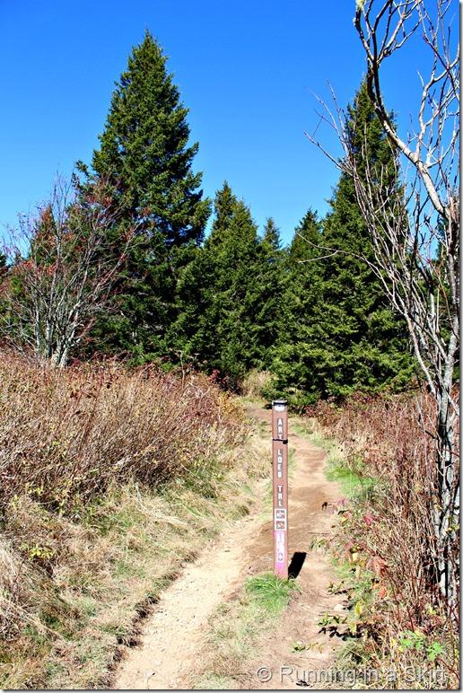 black-balsam-hike-trail-head