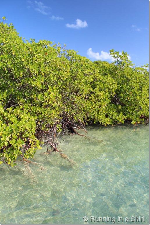 Mangroves Antigua