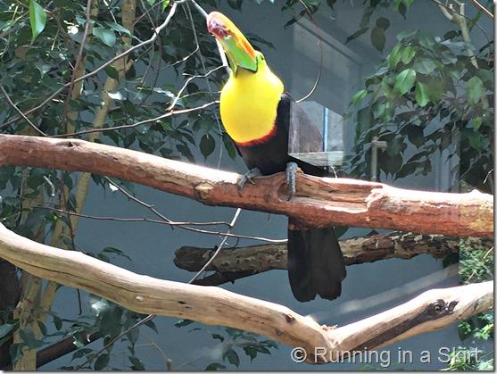 national aviary tucan