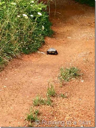 barnsley gardens turtle 2