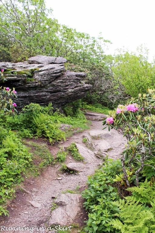 Craggy Pinnacle Hiking trail near Asheville NC.