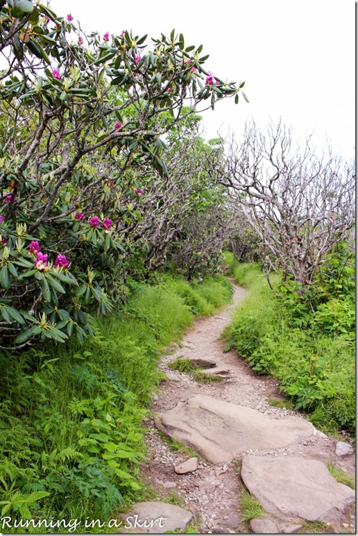 craggy gardens hike-44-2