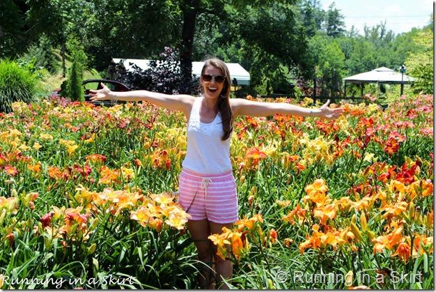 Blue Ridge Day Lilly Farm-13-3