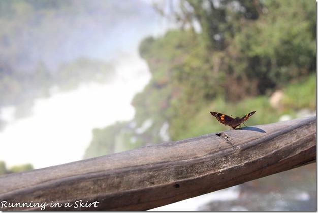 Iguazu Falls- Argentina Side, Butterflys