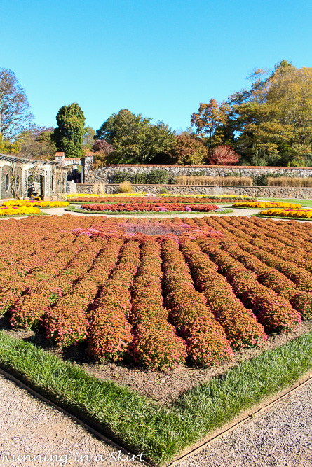 Biltmore Estate Gardens Fall - See gorgeous mums and stunning fall leaves!/ Running in a Skirt