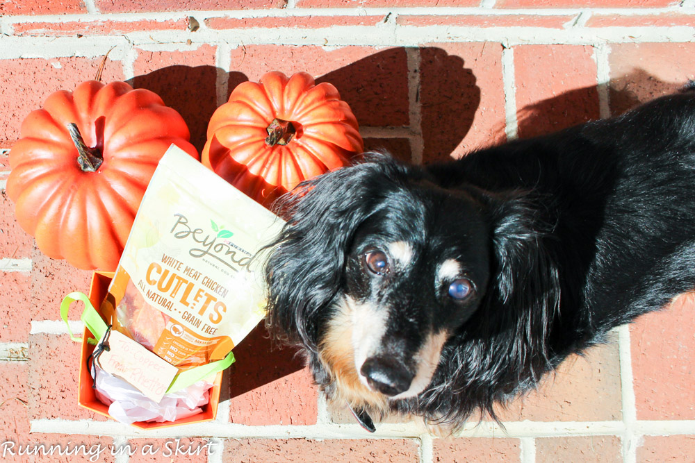 Dog Trick or Treating with Purina Beyond White Meat Chicken Cutlets/ Running in a Skirt