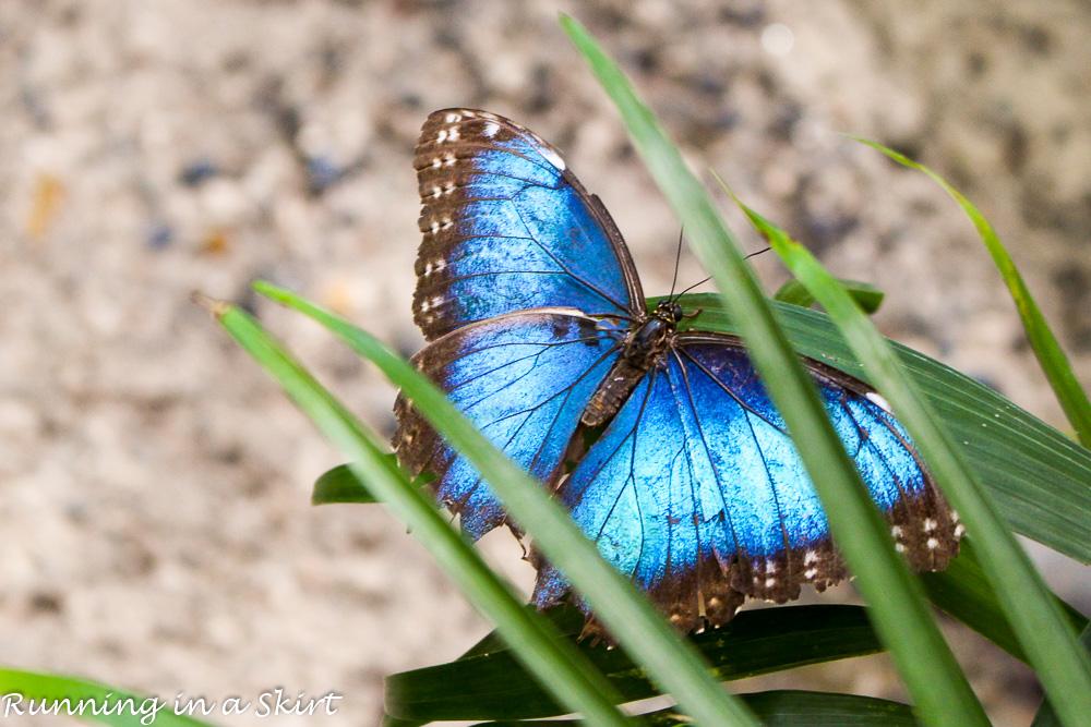 Butterfly's in Key West
