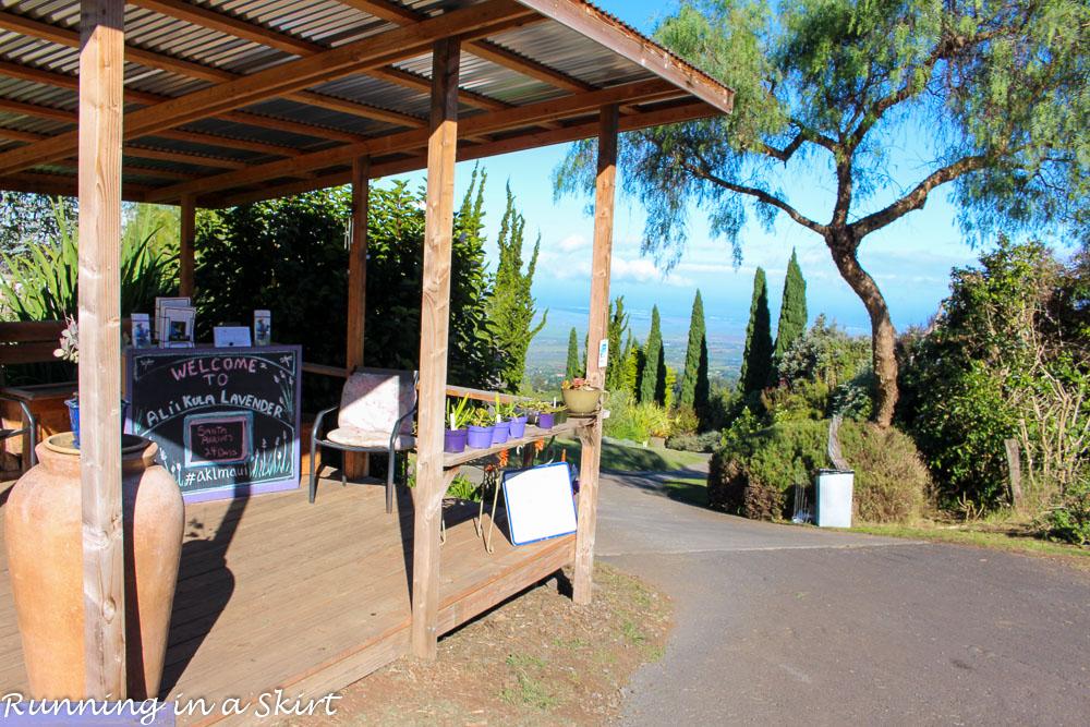 Lavender Farm on Maui, Ali'i' Kula / Running in a Skirt