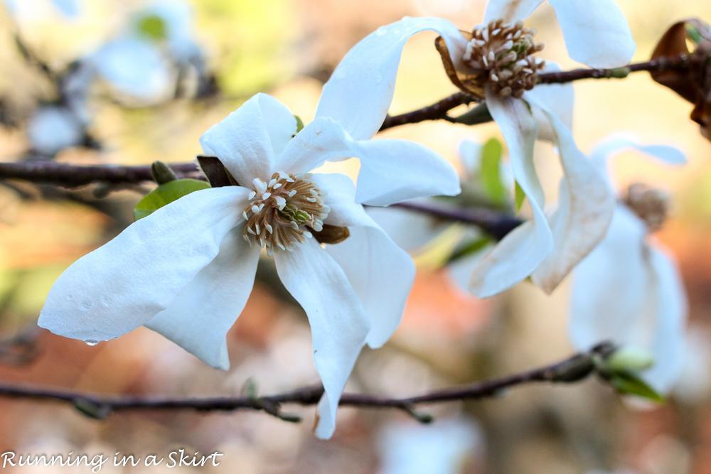 Biltmore Blooms-106-9
