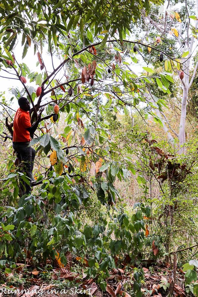What to do in Grenada- Grenada Belmond Estate (2)
