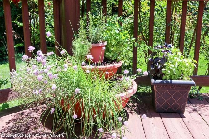 Garden 2016-6-4