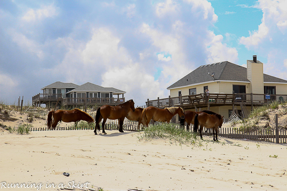 Outer Banks-385-26