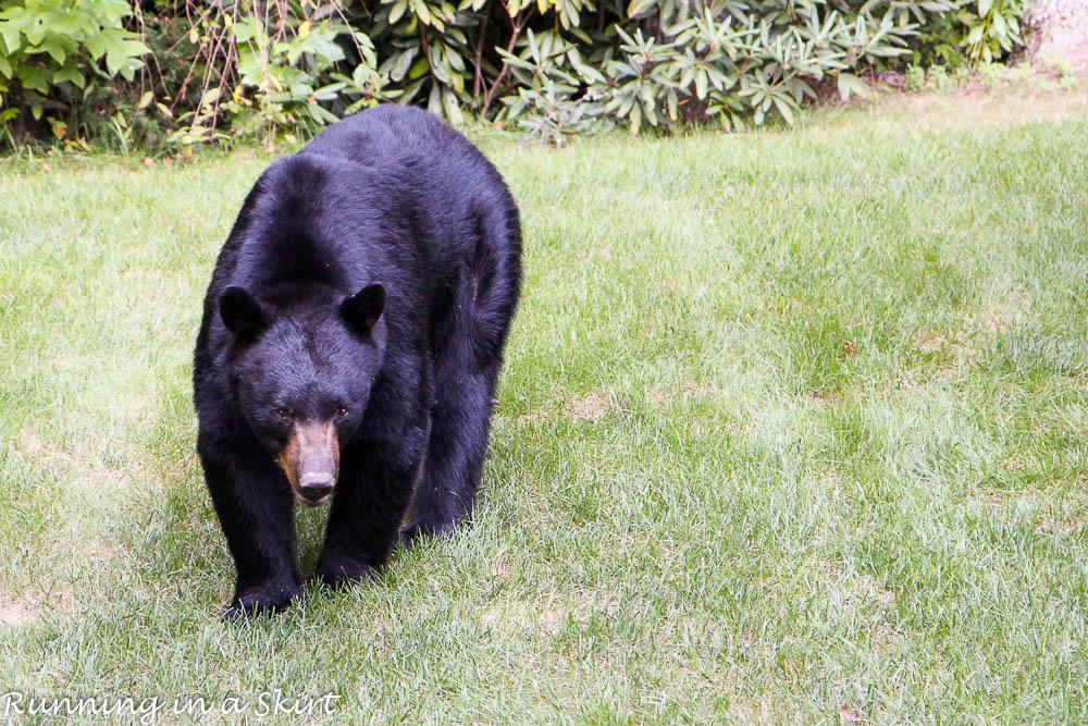 Bear-20-1