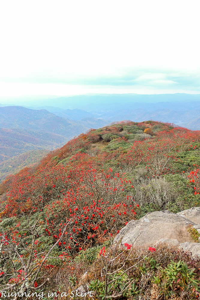 craggy-pinacle-in-fall-29