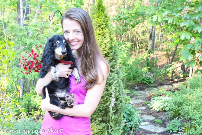 How I Keep My Dogs Healthy