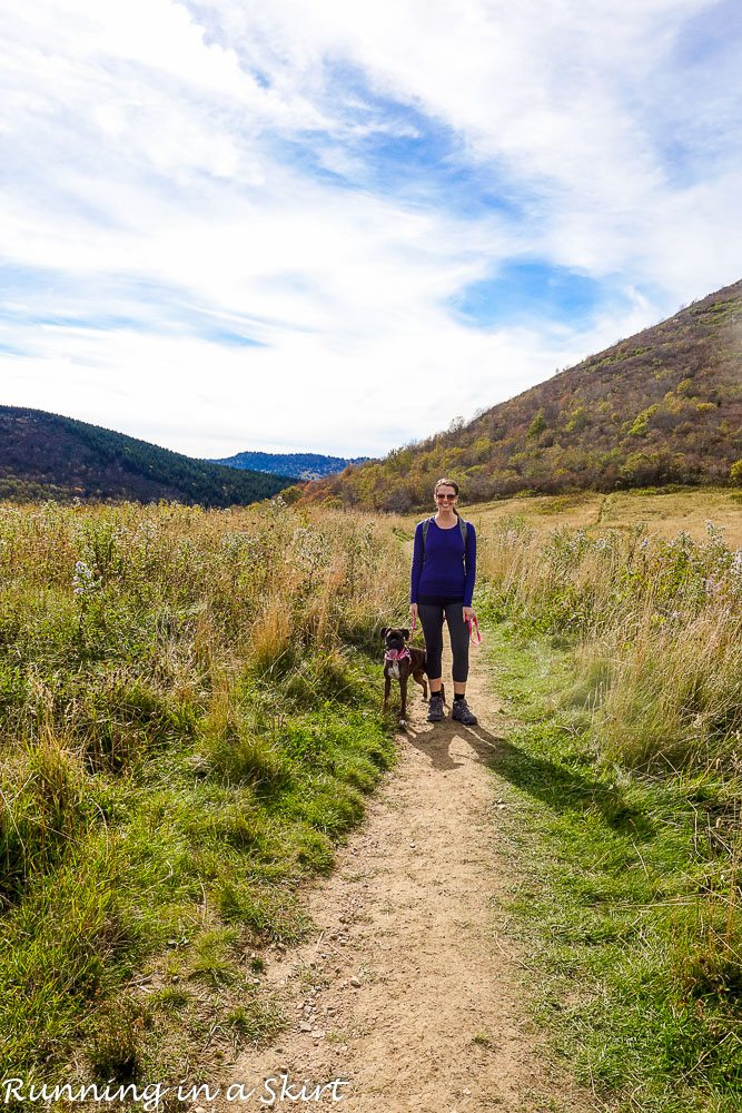 Essential Tips for Hiking with Dogs