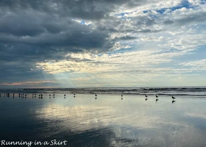 Beach scene with birds on Kiawah Island SC.