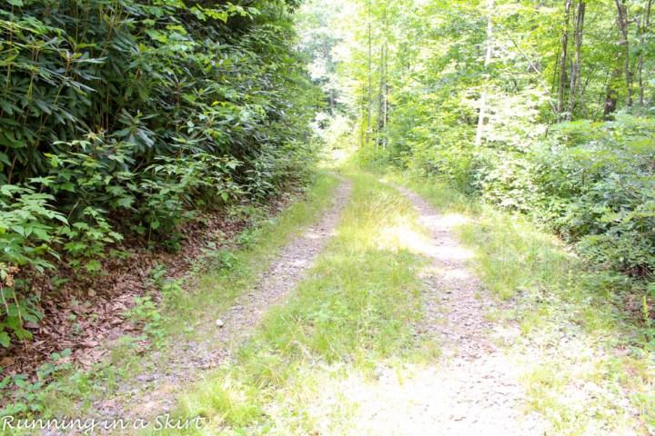 Easy hike to Log Hallow Falls.