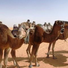100 km del Sahara NO STOP, è già mal d'Africa?