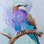 Watercolour painting. Lilac Breasted Roller (LBA0015). Artist: Lori Bentley