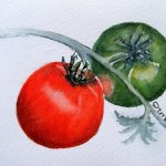 Watercolour Paintings. Traffic Light Tomatoes (IOA001). Artist: Ingrid Ormestad