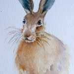 Watercolour Paintings. Young Buck (IOA009). Artist: Ingrid Ormestad