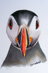 Watercolour Paintings. Red Eye (IOA010). Artist: Ingrid Ormestad