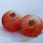 Watercolour painting. Pomegranate Pair (IOA026). Artist: Ingrid Ormestad