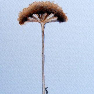 Watercolour painting. Purple Fennel Head (IOA036). Artist: Ingrid Ormestad