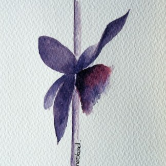 Watercolour painting. Orchid (IOA040) Artist: Ingrid Ormestad