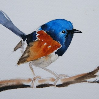 Watercolour painting. Superb Fairy Wren (LBA032) Artist: Lori Bentley