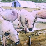 Watercolour Painting. Porkies (POB009) Artist: Polly Birchall